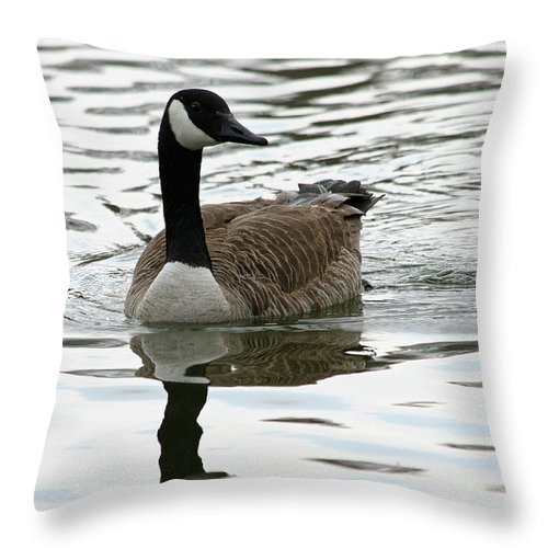 Canadian Geese Throw Pillow featuring the photograph Canadian Goose by Rachel Roushey