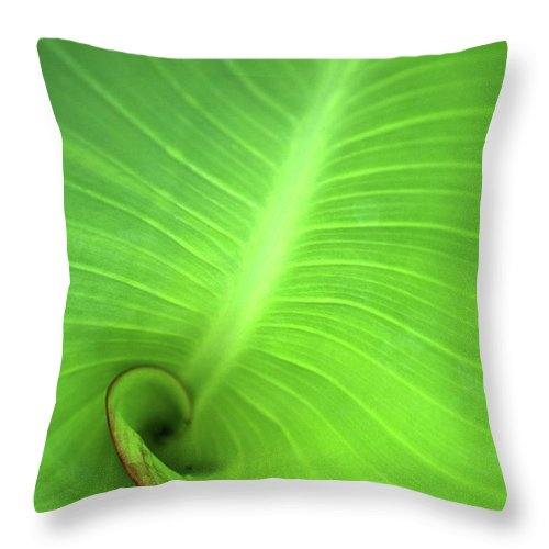Background Throw Pillow featuring the photograph Canalilly Ear by Charles Bacon Jr
