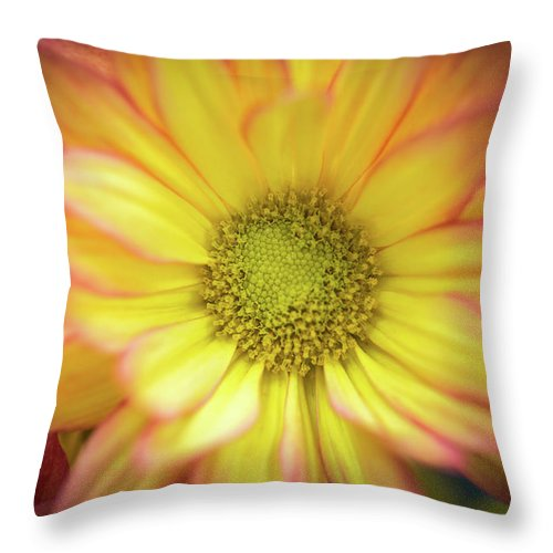 Chrysanthemum Throw Pillow featuring the photograph Candy-like by Calazone's Flics