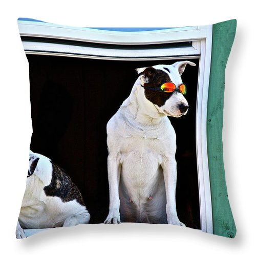 Animals Throw Pillow featuring the photograph Canine Comedians by Diana Hatcher