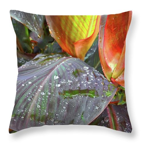 Canna Lilies Throw Pillow featuring the photograph Canna Lilies II by Kirsten Giving