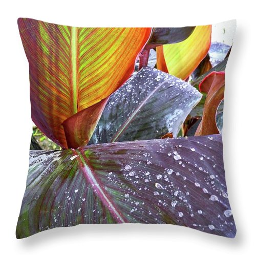 Canna Lilies Throw Pillow featuring the photograph Canna Lily I by Kirsten Giving