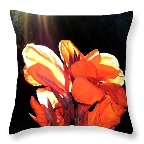 Canna Lily Throw Pillow featuring the photograph Canna Lily by Will Borden