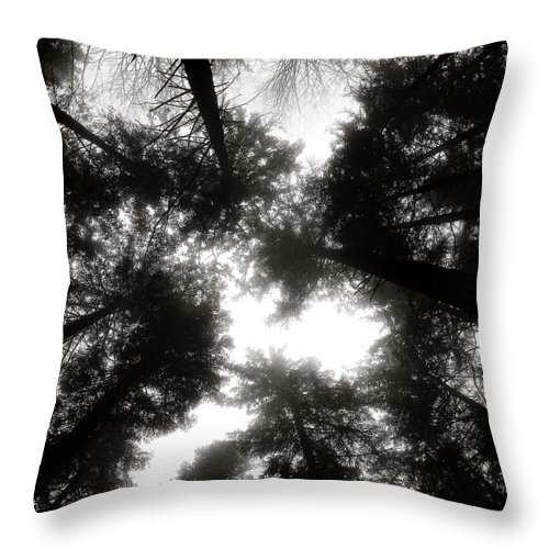 Trees Throw Pillow featuring the photograph Canopy by Dave Bowman