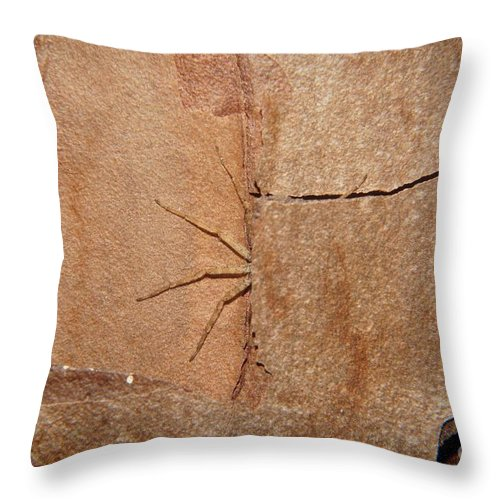 Spider Throw Pillow featuring the photograph Can't See Me by Lynda Dawson-Youngclaus