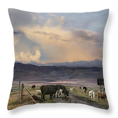 Nevada Throw Pillow featuring the photograph Canyon Road 2 by Karen W Meyer