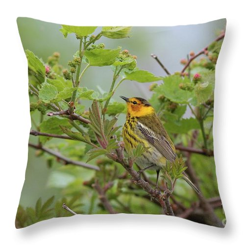 Bird Throw Pillow featuring the photograph Cape May Warbler by Charles Owens