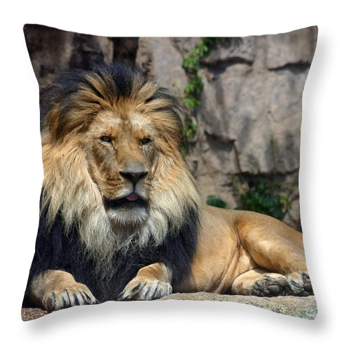 Lion Throw Pillow featuring the photograph Captive Pride by Anthony Jones