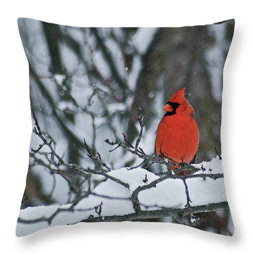 Cardinal Throw Pillow featuring the photograph Cardinal And Snow by Michael Peychich