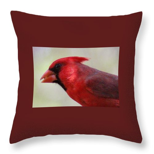 Bird Throw Pillow featuring the photograph Cardinal Closeup D-bn2 by Edward Dobosh