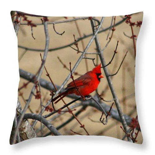 Bird Throw Pillow featuring the photograph Cardinal by David Dunham