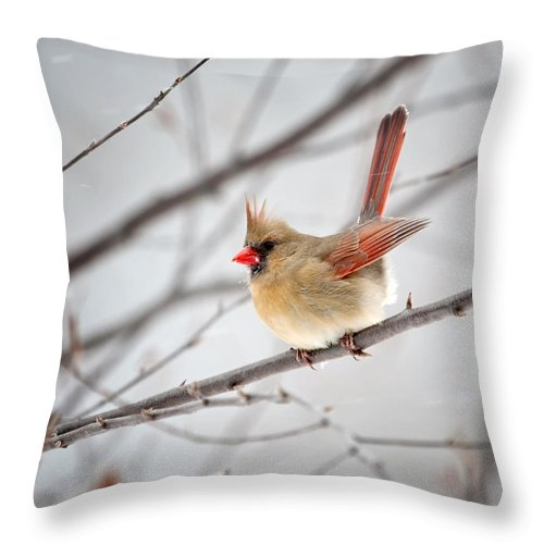 Cardinal Throw Pillow featuring the photograph Cardinal Facing A Brisk Wind by Al Mueller