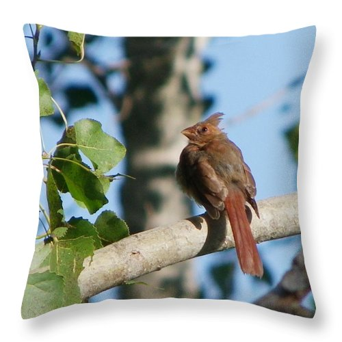 Birds Throw Pillow featuring the photograph Cardinal Fledged by Peggy King