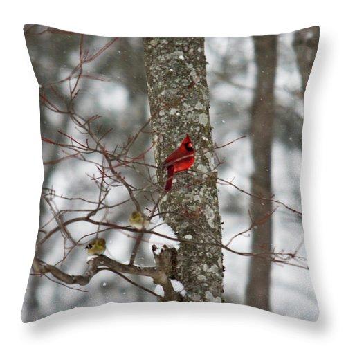 Cardinal Throw Pillow featuring the photograph Cardinal In Snow Storm by Douglas Barnett