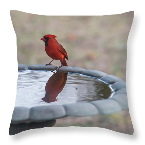 Terry Deluco Throw Pillow featuring the photograph Cardinal Reflection by Terry DeLuco