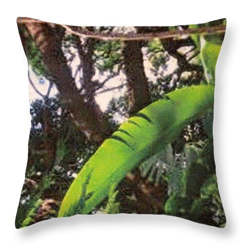 Caribbean Throw Pillow featuring the photograph Caribbean Banana Leaf by Ian MacDonald