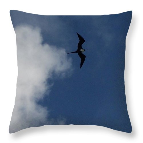 Bird Throw Pillow featuring the photograph Caribbean Sky by Michelle Miron-Rebbe