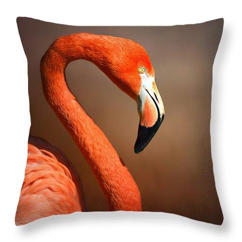 Flamingo Throw Pillow featuring the photograph Caribean Flamingo Portrait by Johan Swanepoel