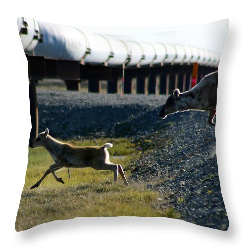 Caribou Throw Pillow featuring the photograph Caribou Cow And Fawn by Anthony Jones