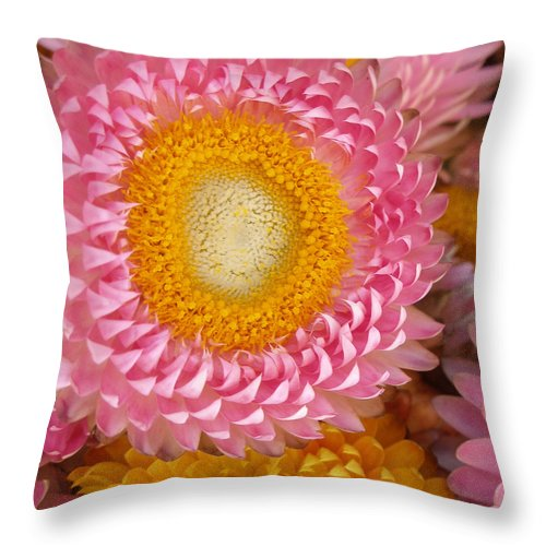 Flower Throw Pillow featuring the photograph Carmel Flower by Sarah Madsen