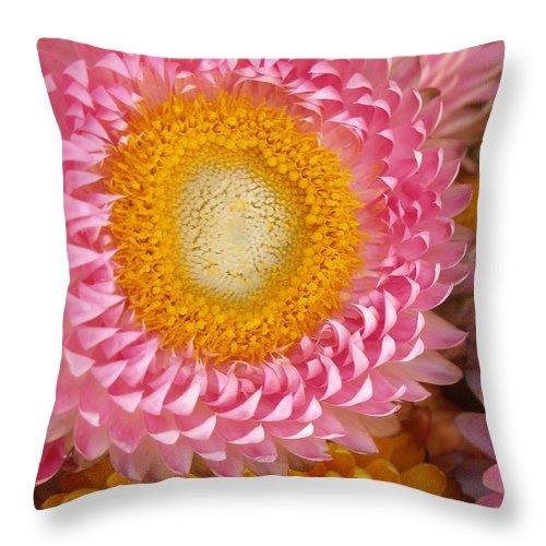 Flower Throw Pillow featuring the photograph Carmel Flower by Sarah Madsen
