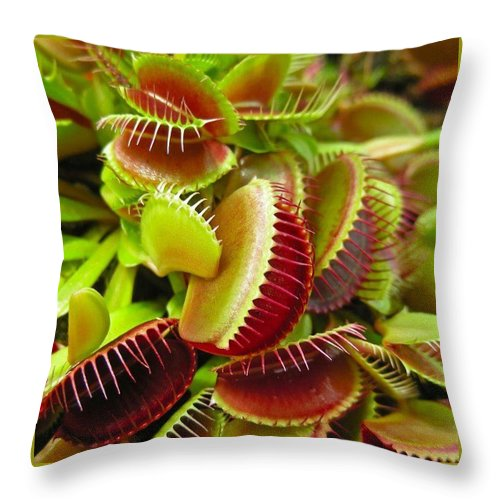 Nature Throw Pillow featuring the photograph Carnivores by Hoang Bui