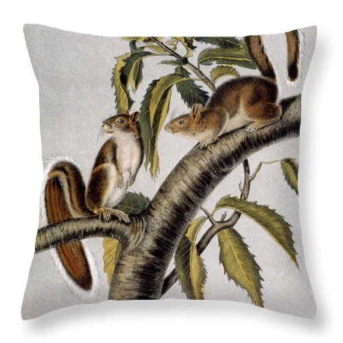 1846 Throw Pillow featuring the photograph Carolina Grey Squirrel by Granger