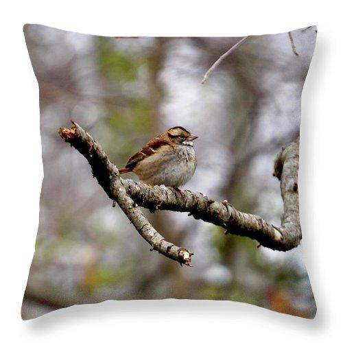 Birds Throw Pillow featuring the photograph Carolina Wren by Beth Deitrick