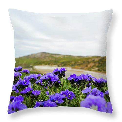 Carrizo Plain National Monument Throw Pillow featuring the photograph Carrizo Plains Phacelia by Kyle Hanson