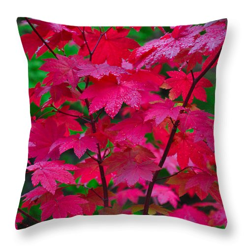 Autumn Throw Pillow featuring the photograph Cascade Autumn Leafs 3 by Noah Cole