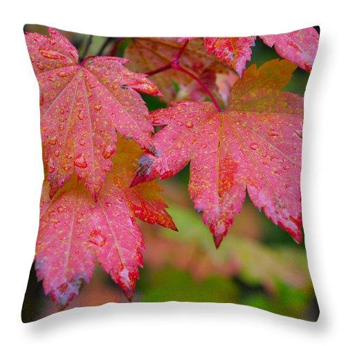 Autumn Throw Pillow featuring the photograph Cascade Autumn Leafs 5 by Noah Cole