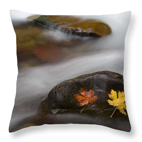 Leaves Throw Pillow featuring the photograph Castaways by Mike Dawson