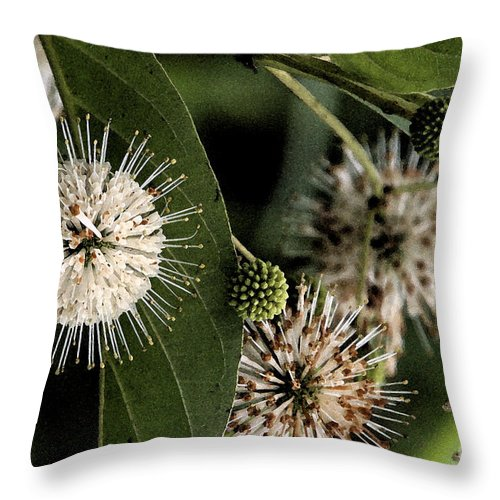Nature Throw Pillow featuring the photograph Casting Seeds by Janice Keener