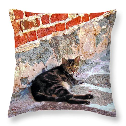 Cats Throw Pillow featuring the photograph Cat Against Stone by Susan Savad