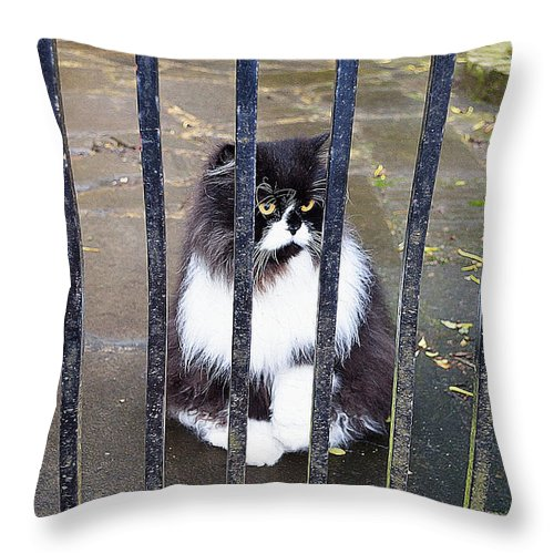 Cat Art Throw Pillow featuring the painting Cat At The Gate by Queso Espinosa