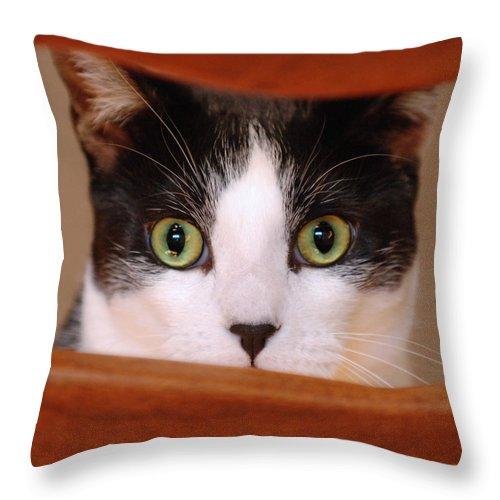 Pet Throw Pillow featuring the photograph Cat Eyes by Jill Reger