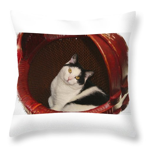 Cat Throw Pillow featuring the photograph Cat In A Basket by Margie Wildblood