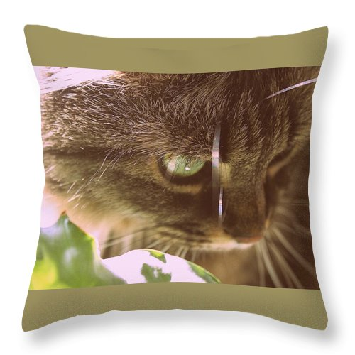 Cat Throw Pillow featuring the photograph Cat In Sunlight by Samiksa Art