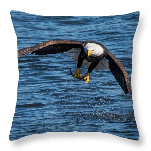 Eagle Throw Pillow featuring the photograph Catch Of The Day by Kevin Esterline