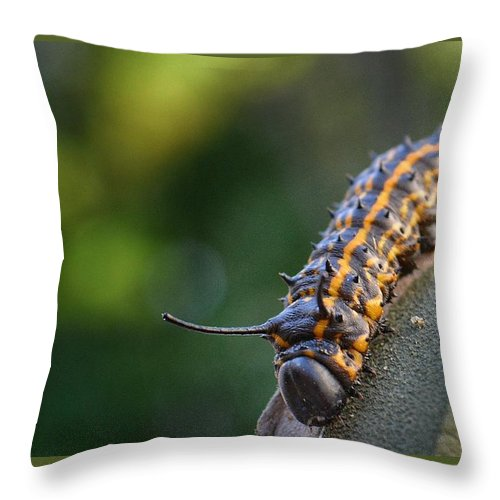 Caterpillar Throw Pillow featuring the photograph Macro -caterpillar by Adrian DeLeon