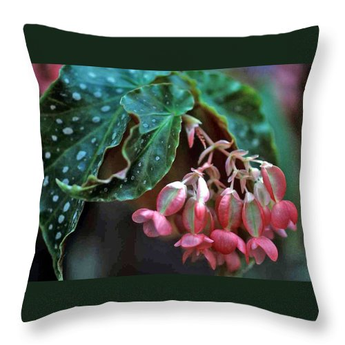 Cat's Paw Begonia Throw Pillow featuring the photograph Cat's Paw Begonia by Laurie Paci