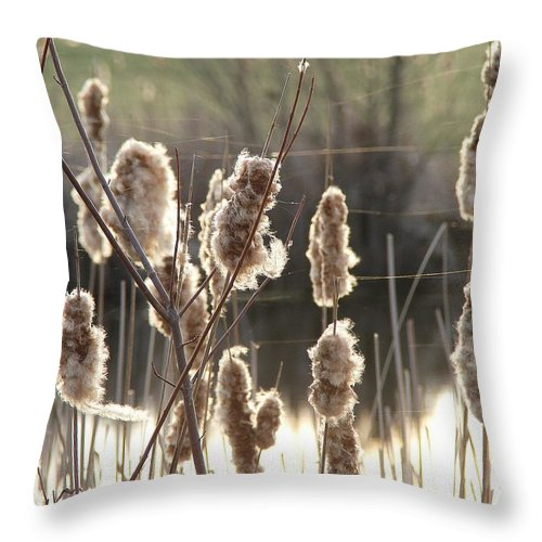 Throw Pillow featuring the photograph Cattails by Luciana Seymour