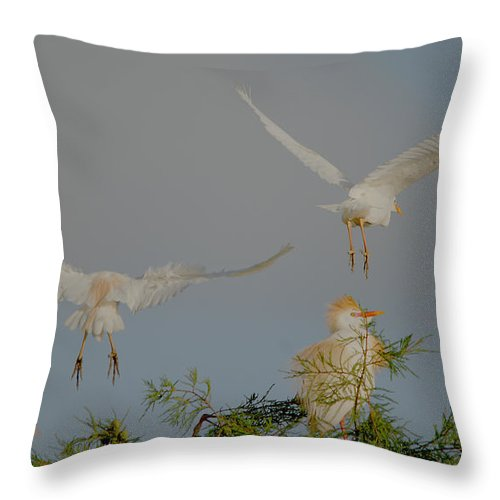 Roy Williams Throw Pillow featuring the photograph Cattle Egrets At Treetop by Roy Williams