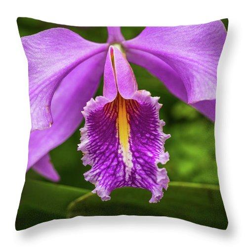 Cattleya Throw Pillow featuring the photograph Cattleya Purpurata by Calazone's Flics
