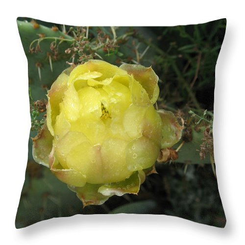 Catus Throw Pillow featuring the photograph Catusbud With Dew by Christiane Schulze Art And Photography