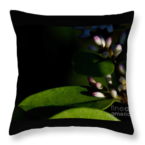 Plant Throw Pillow featuring the photograph Caught Between Shadow And Light by Linda Shafer
