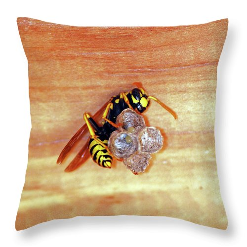 Wasp Throw Pillow featuring the photograph Caught In The Act by Lori Tambakis