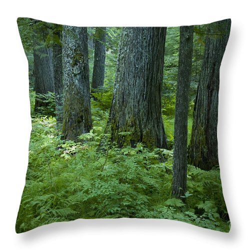 Grove Throw Pillow featuring the photograph Cedar Grove by Idaho Scenic Images Linda Lantzy