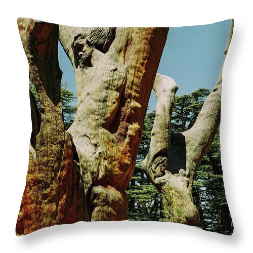 Cedars Of God Throw Pillow featuring the photograph Cedars Of God Jesus Tree by Briana M