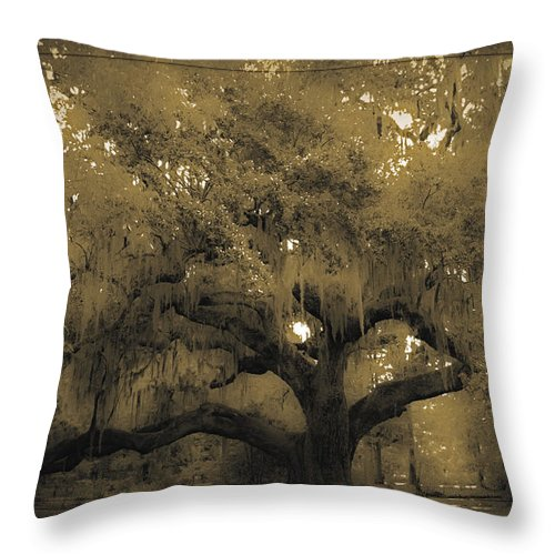 Live Oak Throw Pillow featuring the photograph Centurion Oak by DigiArt Diaries by Vicky B Fuller